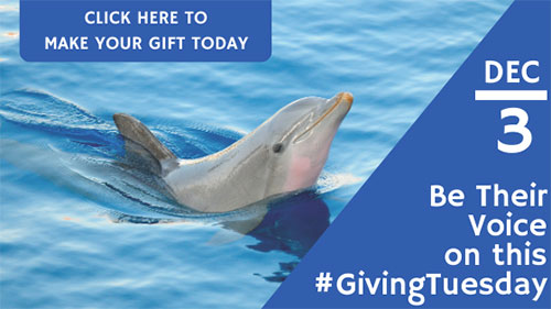 Make your gift today