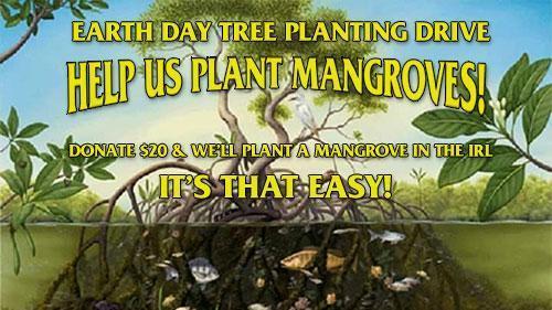 Help Us Plant Mangroves!