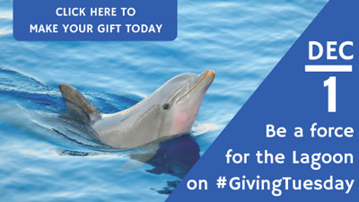 Be a force for the lagoon on #GivingTuesday