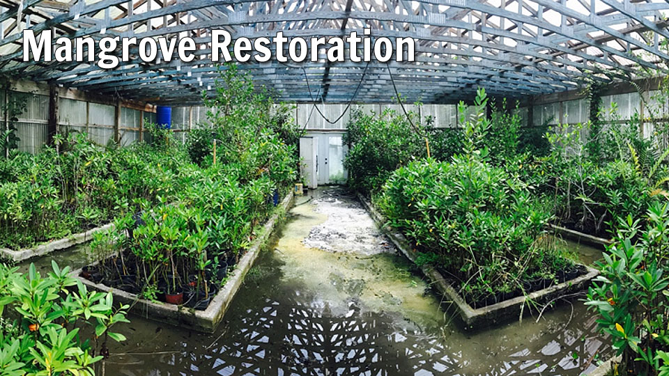 Mangrove Restoration: Helping to Restore the Lagoon | Marine